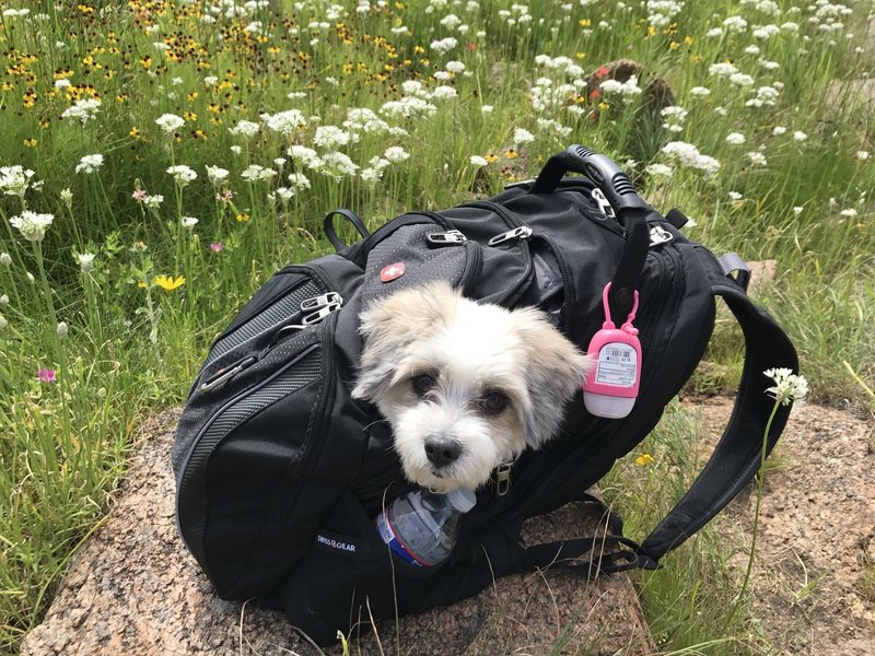 By the time we hit the south rim of the Bison Trail, our tired dog had to be carried.