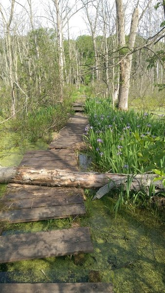 If you brave the missing sections, the boardwalk will take you past incredible views of the Great Marsh.