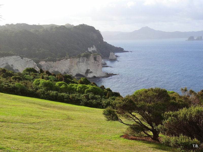 There's a great viewpoint and spot for a picnic near the start of the Cathedral Cove Track.