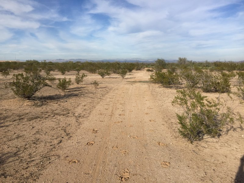 Some doubletrack, north of the Sun Valley Parkway, on the Maricopa Trail.