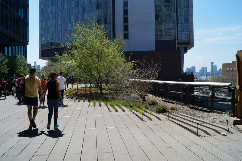 Blossoming trees grow along The High Line.