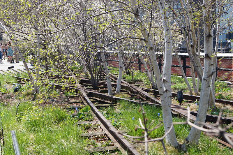 A veritable forest has grown between the tracks on The High Line.