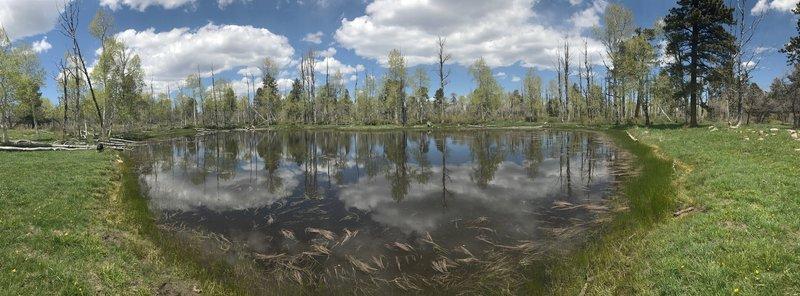 Little Bear Lake.