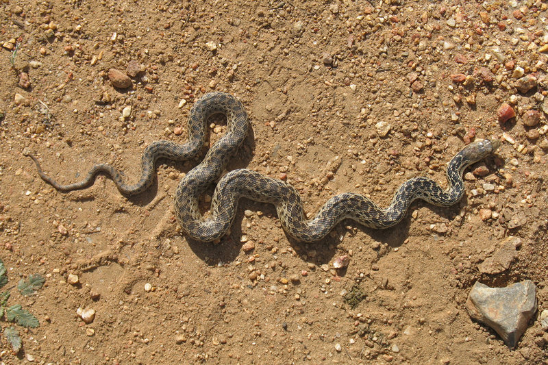 Keep an eye out for snakes in Santa Ysabel Open Space.