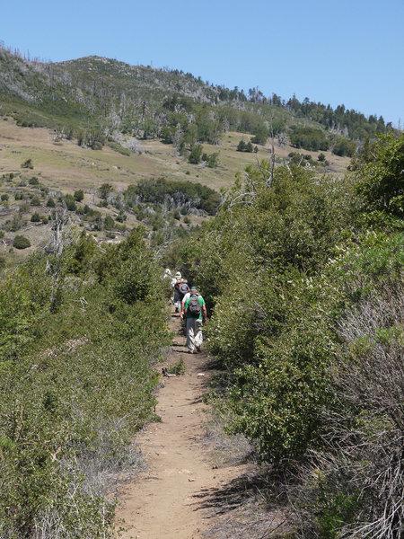 Hikers navigate the West Mesa Loop of Cuyamaca State Park.
