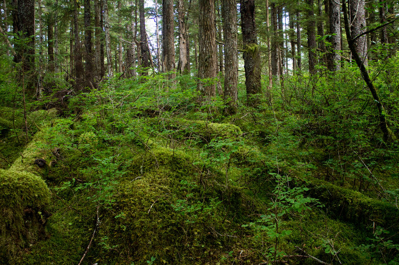Infinite shades of green grow on the Forest Trail.