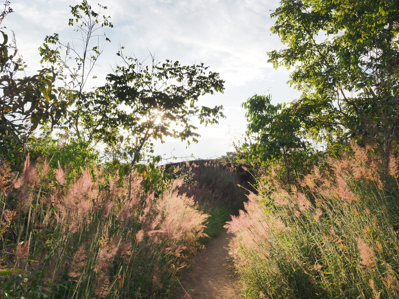 This trail may make you feel like you're walking through that scene in Gladiator.