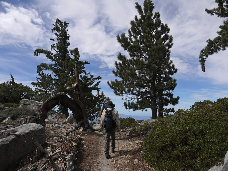 Two hikers ascend the Fuller Ridge Trail (PCT).