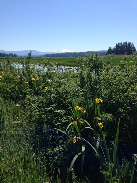 Enjoy gorgeous views of Mt. St. Helens on a clear day over the wetlands.