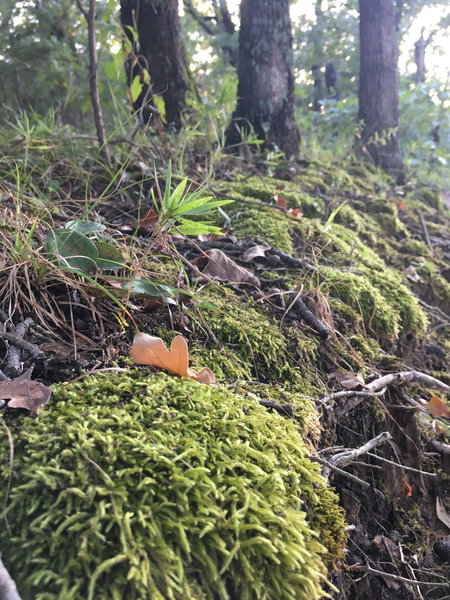 The forest floor is rich in lichen, moss, and a variety of other organisms.