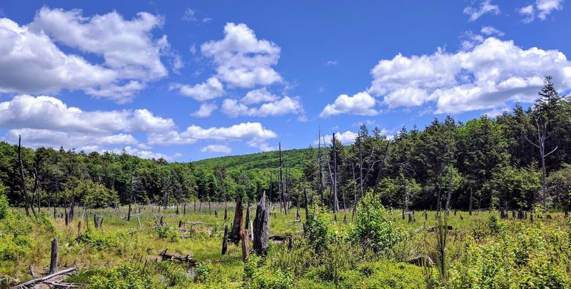 Beautiful swampland sits atop the Kittatinny Mountains of New Jersey.