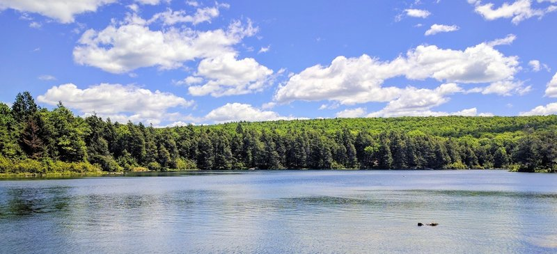 Hemlock Pond provides pleasant trailside companionship.