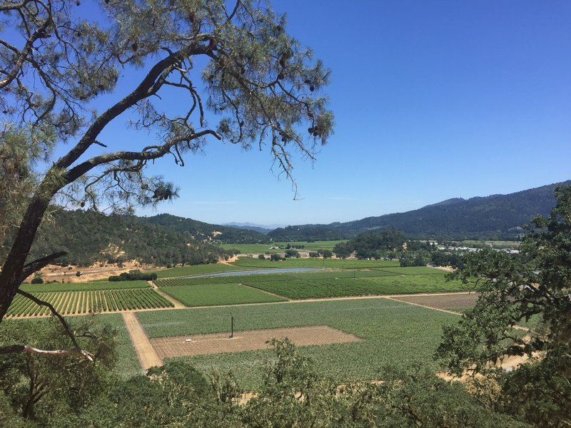 Enjoy a sweeping vista of Napa Valley from the Lower Oat Hill Mine Trail.