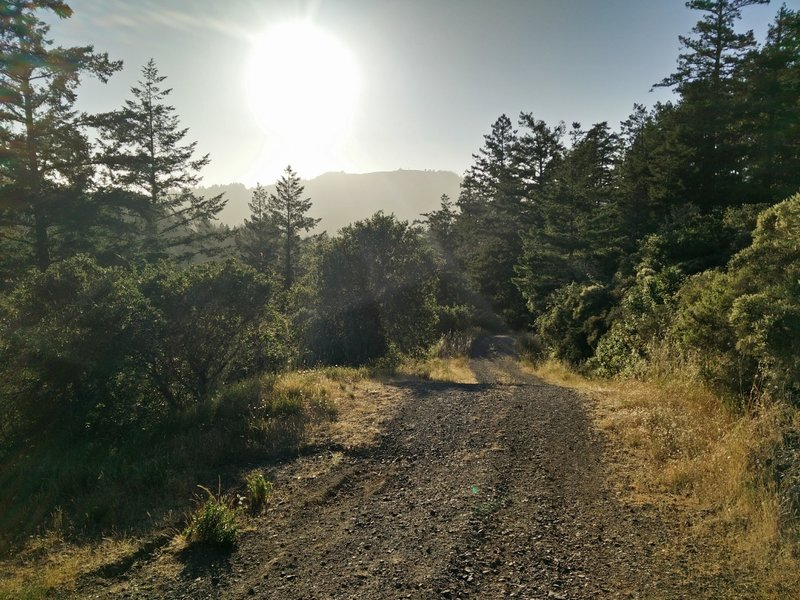 The fire road is smooth and easy to navigate on foot.