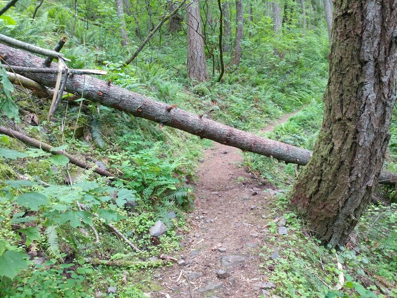 This will be the most difficult obstruction on the trail (taken 06-03-2017).