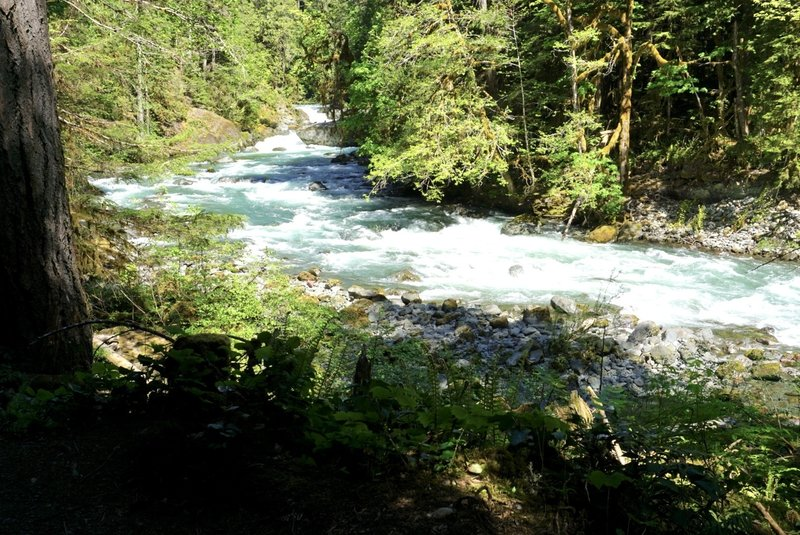 Take a forceful yet cooling and relaxing stroll along the North Fork Skokomish River.
