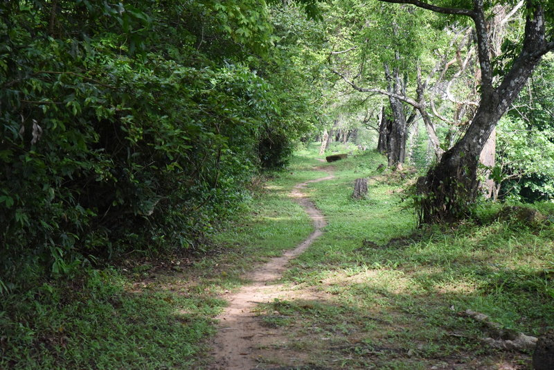 The north side of the Wall Trail narrows into a ribbon of a path in a wide corridor.