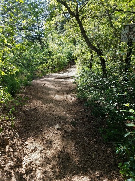 Lower Columbine Trail follows easy terrain and sports a lush canopy.