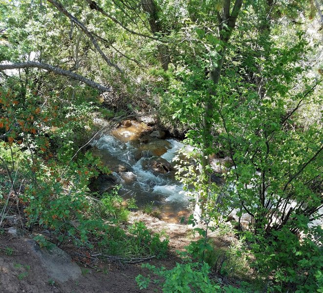 The Lower Columbine Trail runs beside the North Cheyenne Creek and the sounds of the water add to a peaceful trip.