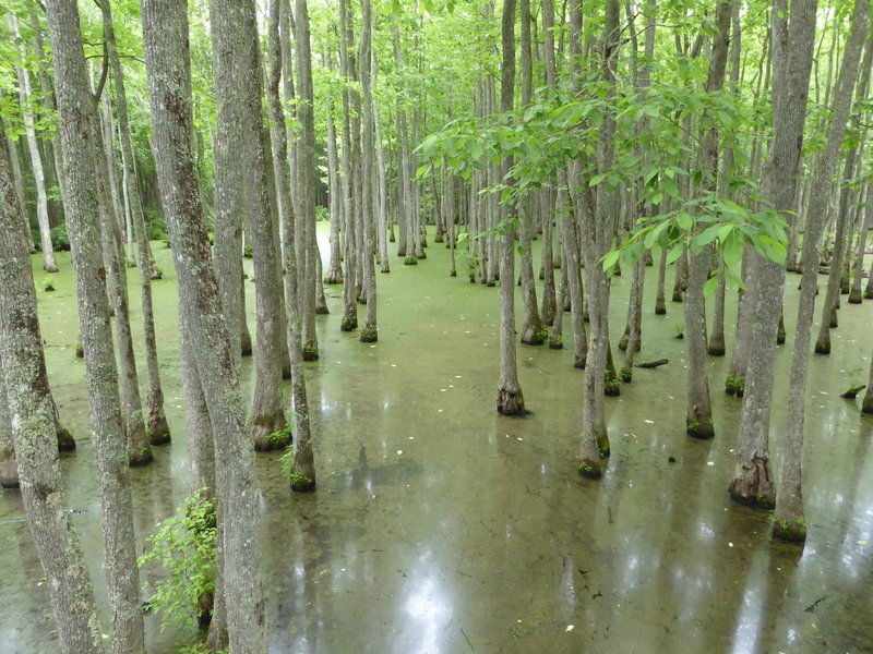 The Ghost River Bayou as seen from the Mineral Slough Boardwalk.
