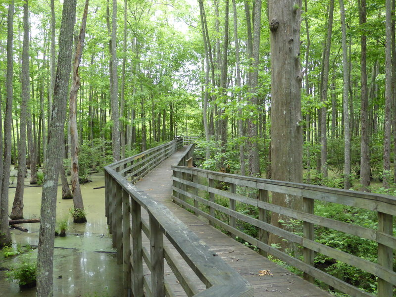 The Mineral Slough Boardwalk over the Ghost River.
