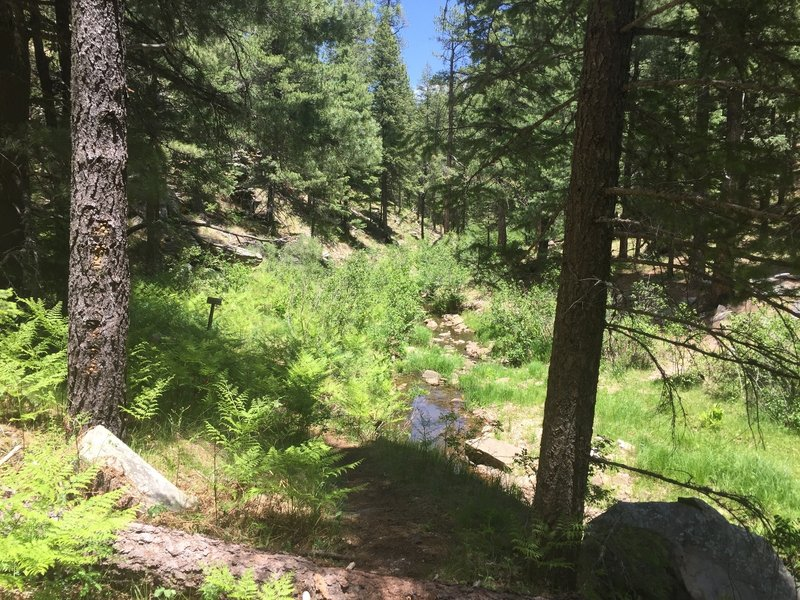 A clump of ferns reaches toward the sun near a small creek.