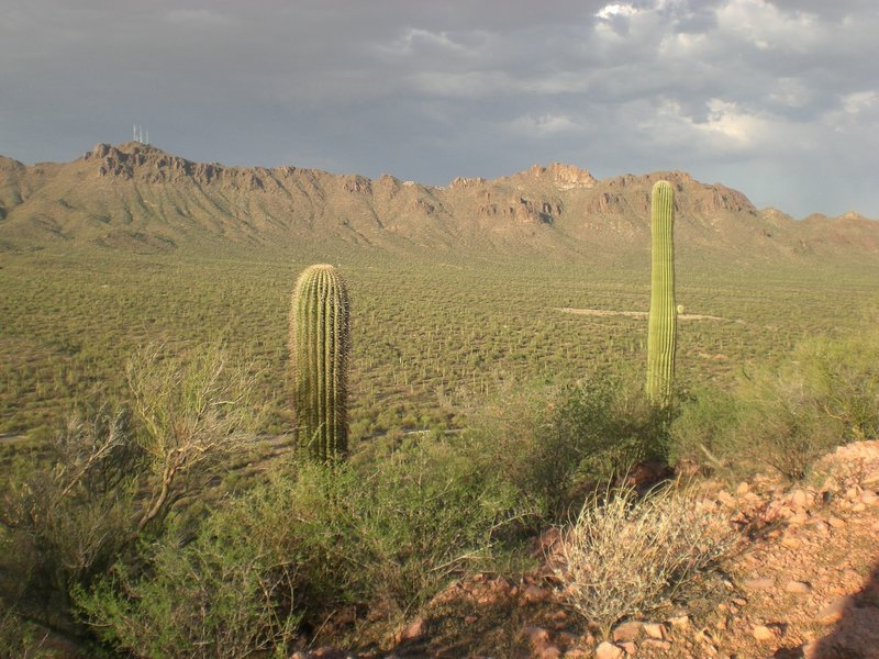 Cacti protrude into the view in front of the Tucson Mountains from the Brown Mountain Trail.