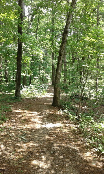 Enjoy the pleasant woodlands above Alley Spring.