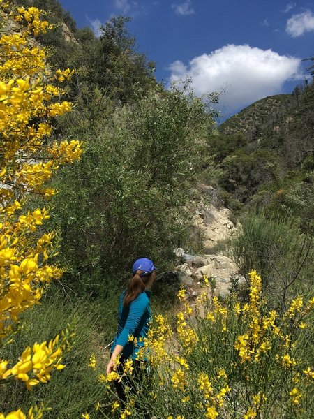 Spring bloom at Colby Canyon.