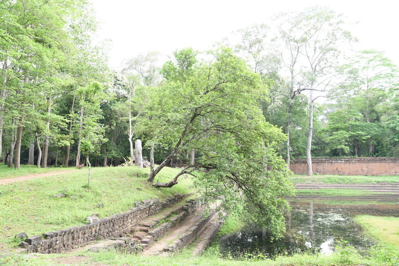 A small tree seems to lean down to touch the water of the royal ponds.