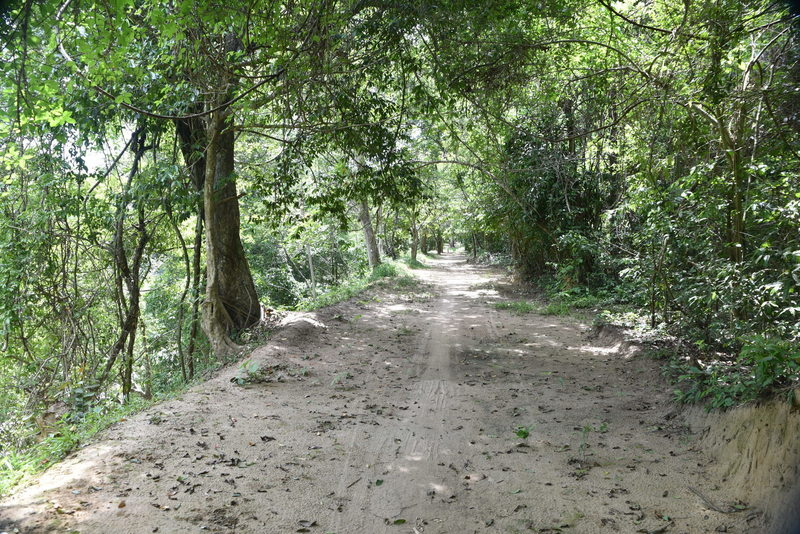 The Angkor Thom Wall Trail is easy as it travels from the North Gate.
