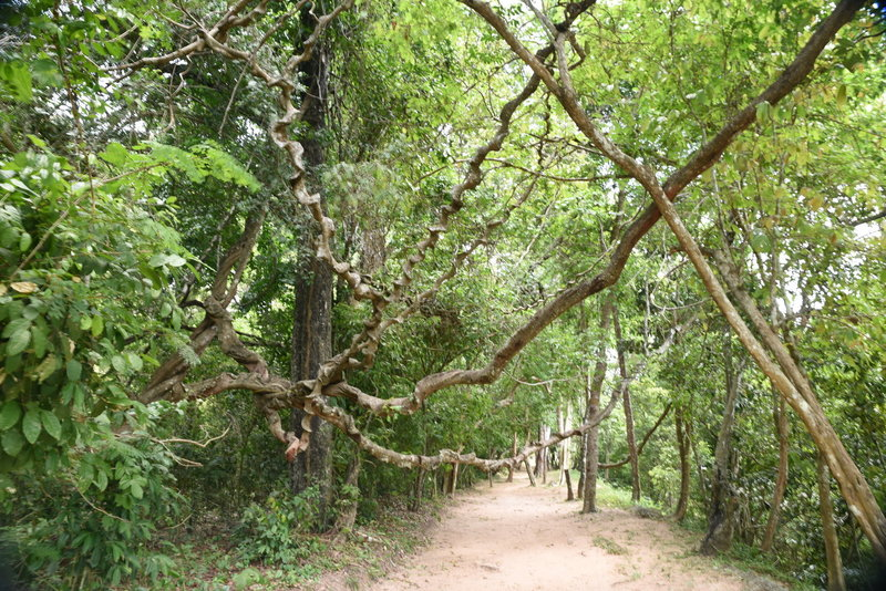 Section of the Angkor Thom Wall Trail between Prasat Chrung Northeast and Victory Gate