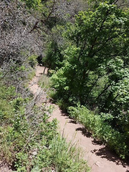 The trail up Rattlesnake Gulch is well maintained near the top.