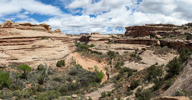 Halfway down from the rim to the canyon floor of Grand Gulch.