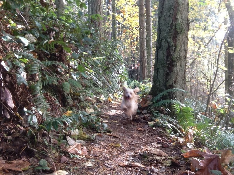 Two legged visitors aren't the only enjoying the trail. Just make sure they're leashed.
