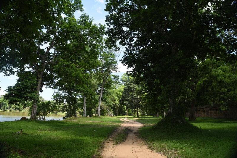 Tall trees line the Angkor Wat Wall Trail.