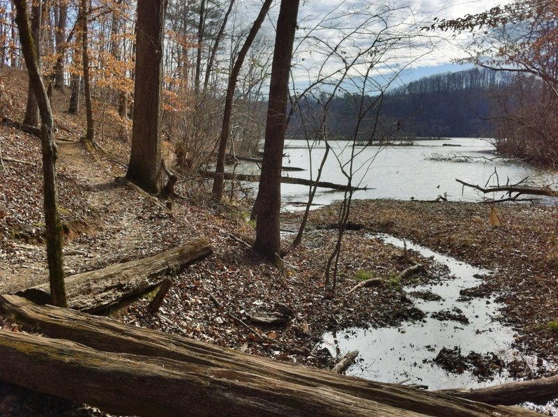 Gorgeous forest and river views await on the Gold Branch Trail.