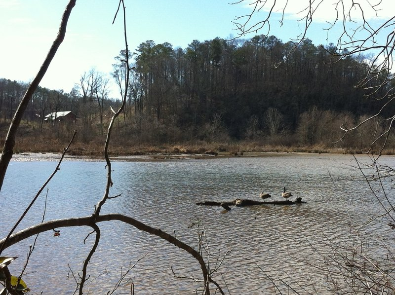 A family of geese sun themselves along the banks of the Chattahoochee.