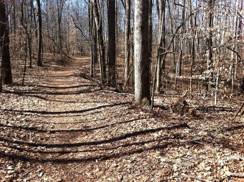 The Gold Branch Trail is well manicured, save for a pleasant cushioning of dried leaves.