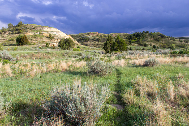 Rolling grasslands as a storm lurks in the distance