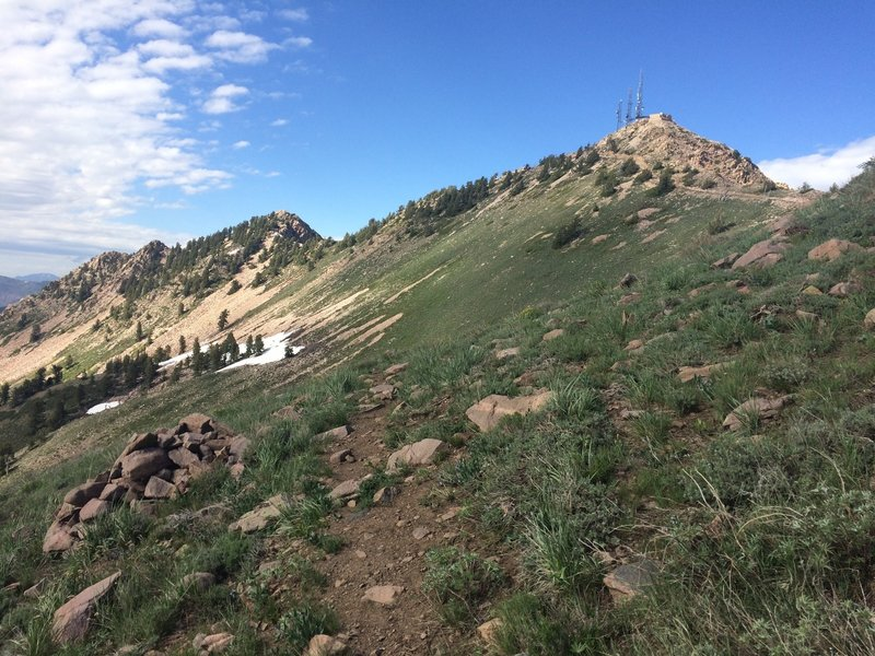 Looking up to the summit of Mt Ogden from the Beus Canyon Trail.