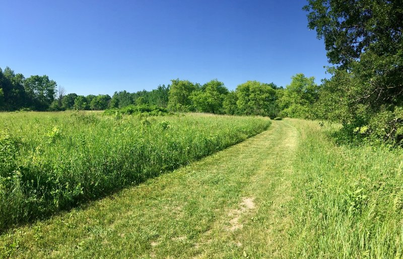 Portions of the Burkhardt Trail travel through tall grass that is mowed down to make travel easy.