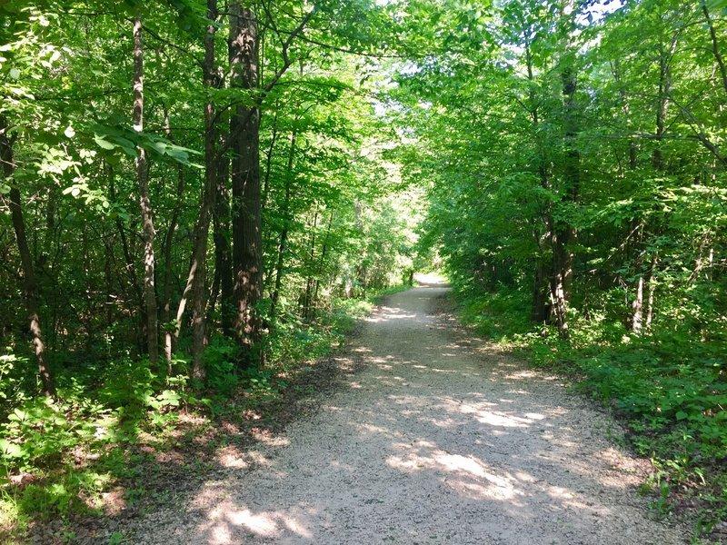 Dappled shade covers the Burkhardt Trail.