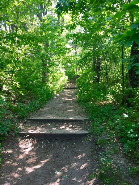 Be prepared for some sections of stairs along the Burkhardt Trail.