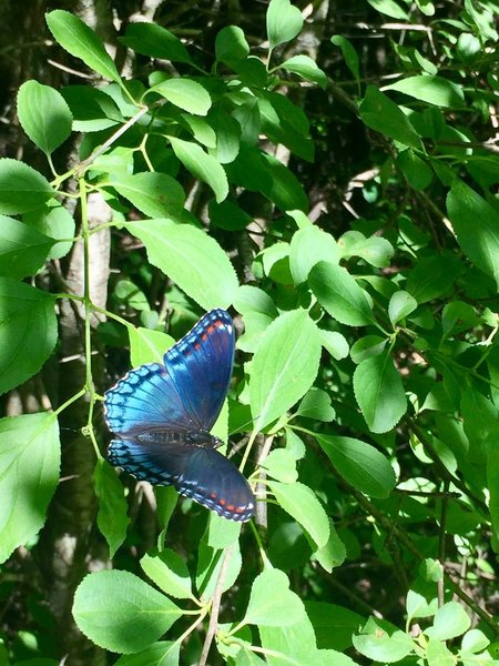 In the early summer, the bright wings of butterflies can be spotted along this trail.