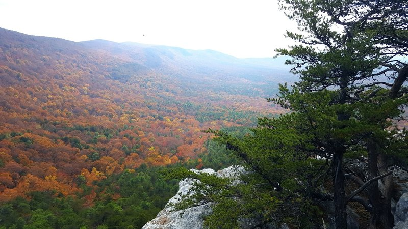 View from McDill Point in the heart of Fall when the leaves are changing.