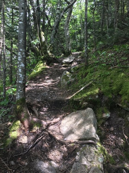 A steep and rough section of the Peekamoose-TAble Trail near Table Mountain.