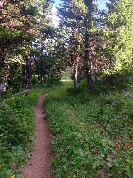 A gentle singletrack starts off this trail.