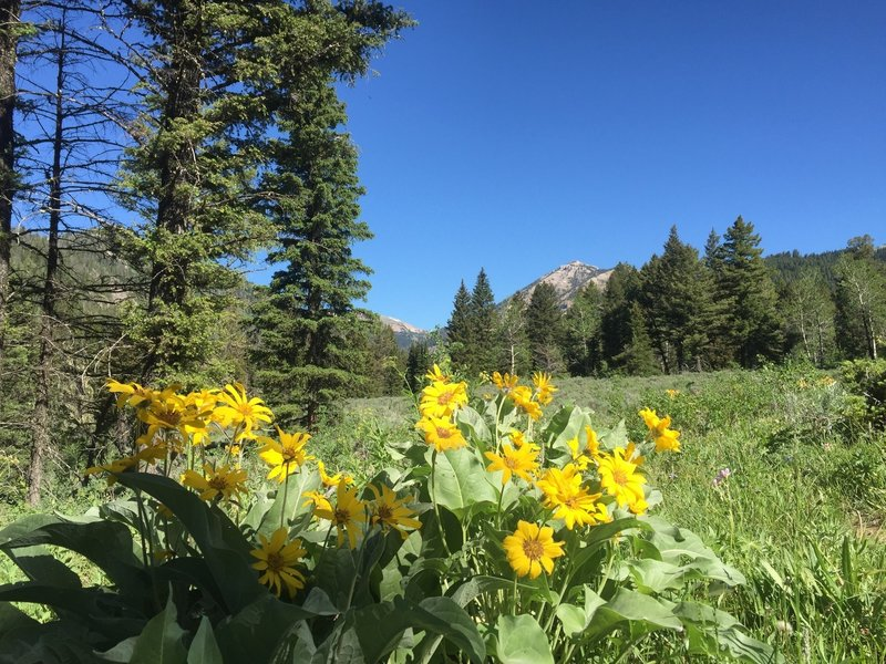 Toward the start of the day, enjoy beautiful views before you start heading close to the creek.