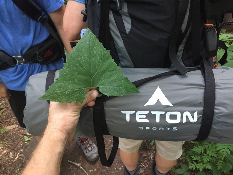 Possibly a nod to nature from Teton Sports.